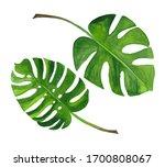 watercolor set of tropical... | Shutterstock . vector #1700808067