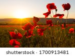 Field Of Poppies Against The...