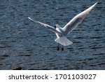Seagull Fly Water Spring Natur...