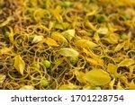 Multiply  Ratchaphruek Flower...