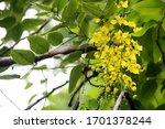 Multiply Flower On The Tree  ...