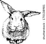 a image of a rabbit with long... | Shutterstock .eps vector #170138981