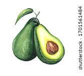 Watercolor Illustration Of An...