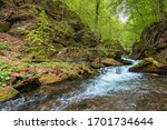 Rapid Water Flow Among The...