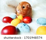 Happy Easter  Guinea Pig And...