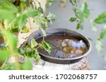 Plastic Bowl Abandoned In A...