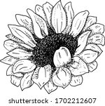 Vector Sunflower  Black And...