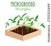 microgreens shungiku. sprouts...   Shutterstock .eps vector #1702331644