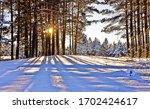 Winter Snow Sunset Forest Tree...