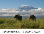 Two Adult Elephants Roam...