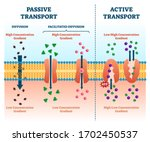 active vs passive transport... | Shutterstock .eps vector #1702450537