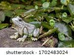 Fake Frog In The Garden