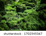Beautiful Bright Green Moss...
