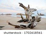 Driftwood Natural Sculpture On...