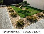 Modern  Conifer Tree Garden...