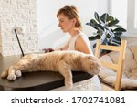 the cat is lying on the table... | Shutterstock . vector #1702741081