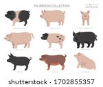 pig breeds collection 3. farm...   Shutterstock .eps vector #1702855357