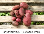 Fresh Red Potatoes With Soil O...