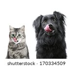 Stock photo portrait of hungry dog and cat licking it s face isolated on white 170334509