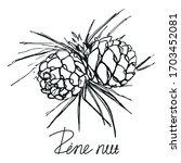 Pinecone Branch  Hand Drawn...