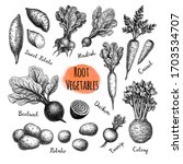 root vegetables big set. ink... | Shutterstock .eps vector #1703534707