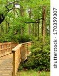 Wooden Bridge Pathway Leading...