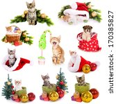 Stock photo collage of animals with christmas decorations isolated on white 170385827