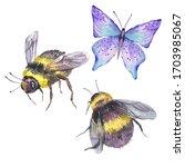 watercolor natural set of bee... | Shutterstock . vector #1703985067