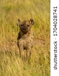 Spotted hyena cub stands in long grass - stock photo