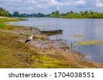 river  trees. pripyat river in...   Shutterstock . vector #1704038551