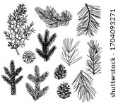 hand drawn christmas plants set.... | Shutterstock .eps vector #1704093271