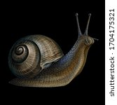 snail. realistic  color ... | Shutterstock .eps vector #1704175321
