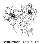 Vector Peony Flowers. Abstract...