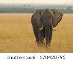 Kenya   August 12  An African...