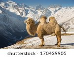 Camel Standing High In The...