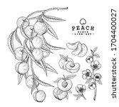 vector sketch peach decorative... | Shutterstock .eps vector #1704400027