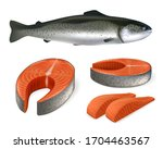 salmon fish realistic vector... | Shutterstock .eps vector #1704463567