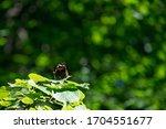 Butterfly Basking In The Sun O...