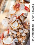 Sea Shell Decoration In A...