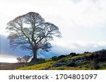 Capturing The Wild Haworth...