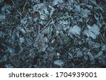 Picture From Frozen Leaves In...