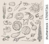 vector drawing vegetables set | Shutterstock .eps vector #170507261