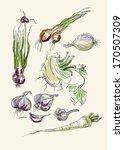 set vector image of spicy... | Shutterstock .eps vector #170507309