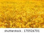 wheat field  | Shutterstock . vector #170526701