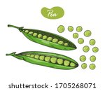 pea is isolated on a white... | Shutterstock .eps vector #1705268071