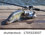 Fishing Concept  Trophy Catch   ...