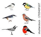 Set Of Birds Vector  Brown...