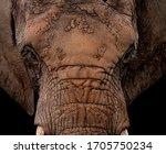 Portrait Of An African Elephan...