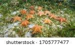 Group Of Starfish Underwater ...