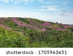 Pink Fields Of Fireweed Cover...
